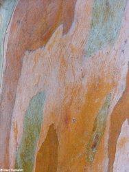 Le cuir des arbres, Marc Fumaroli