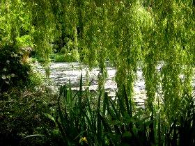 Le bassin aux nymphéas à Giverny